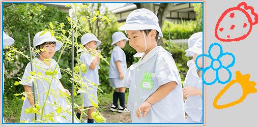 トマトの成長を見守る子供